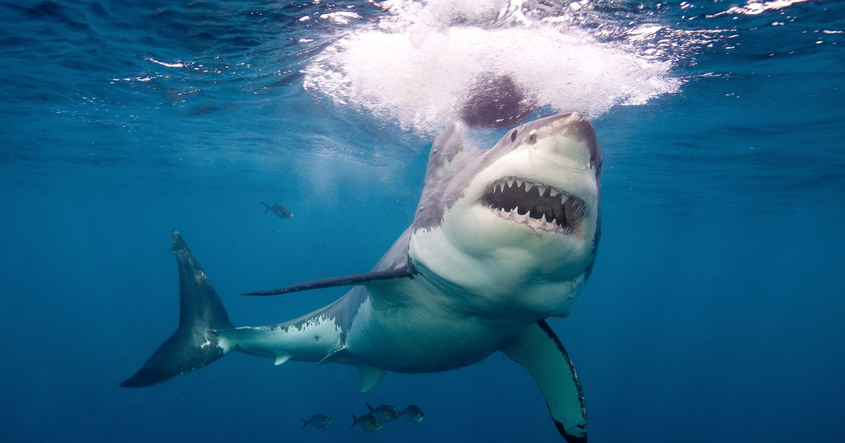 Body of paddleboarder found by fisherman after being 'savaged to death by shark'