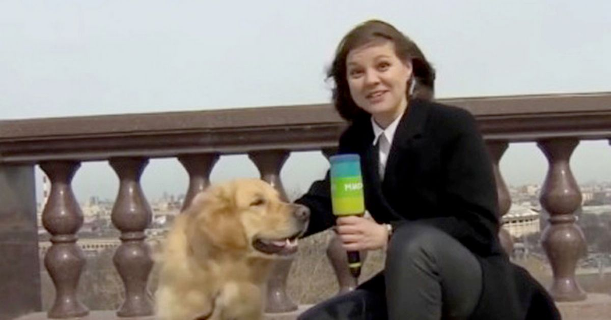 Cheeky dog grabs journalist's microphone during live TV report and runs off