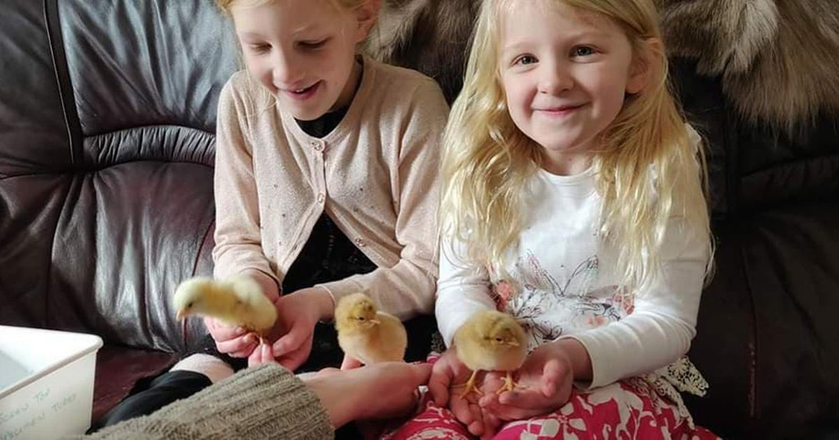 Family have Easter cracked after hatching five chicks from eggs