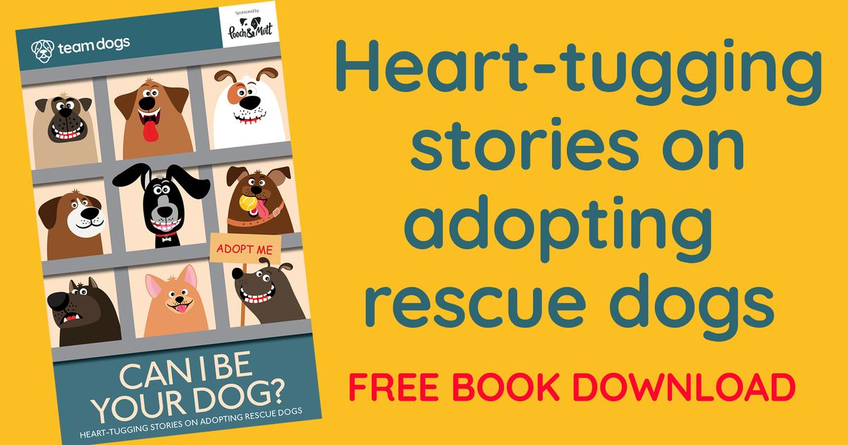 Free digital book shares owners' advice, tips and tales on adopting a rescue dog