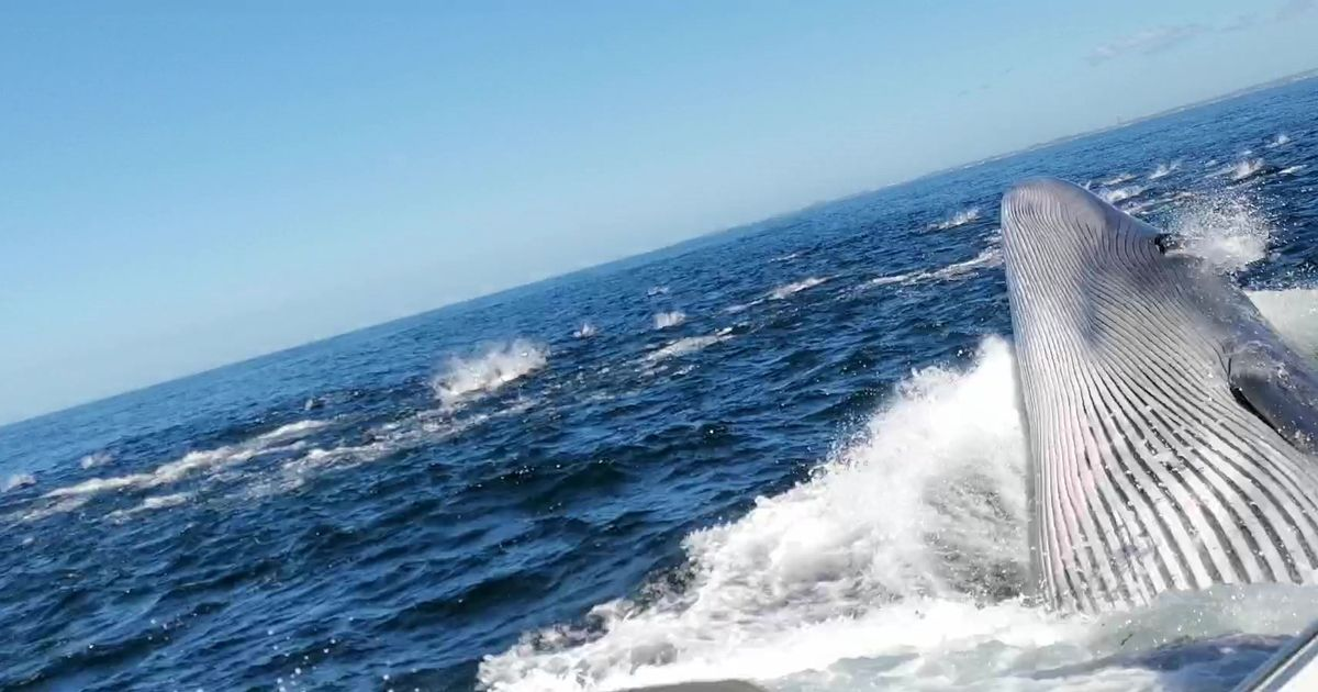 Huge whale knocks dad overboard and nearly swallows him during feeding frenzy