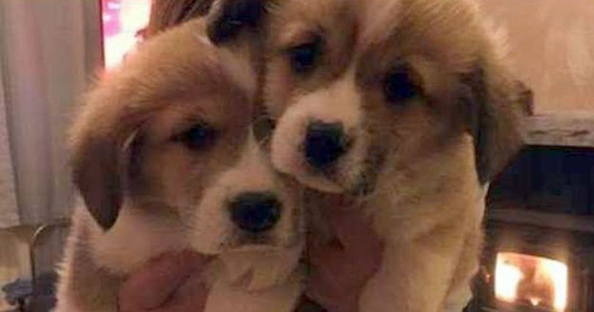 Meet the 'adorable' new puppies lifting the Queen's spirits
