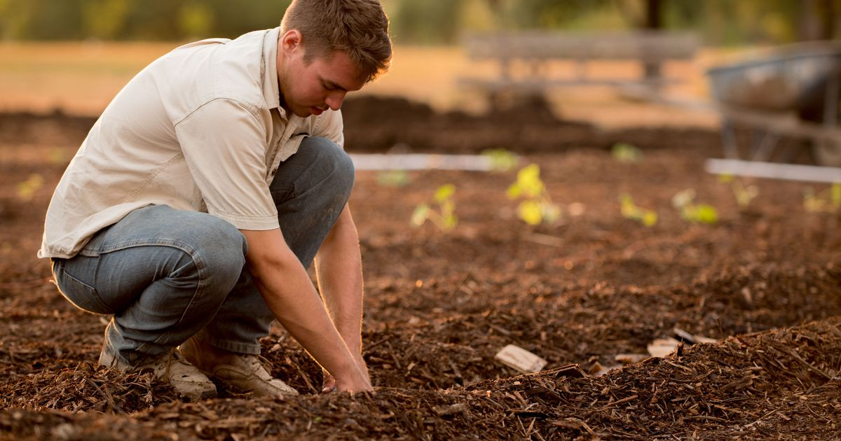 Seven ways you can unknowingly break the law while gardening