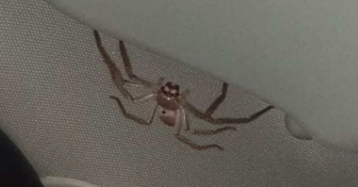 Brit expat nearly crashes as 'world's biggest spider' crawls across windscreen