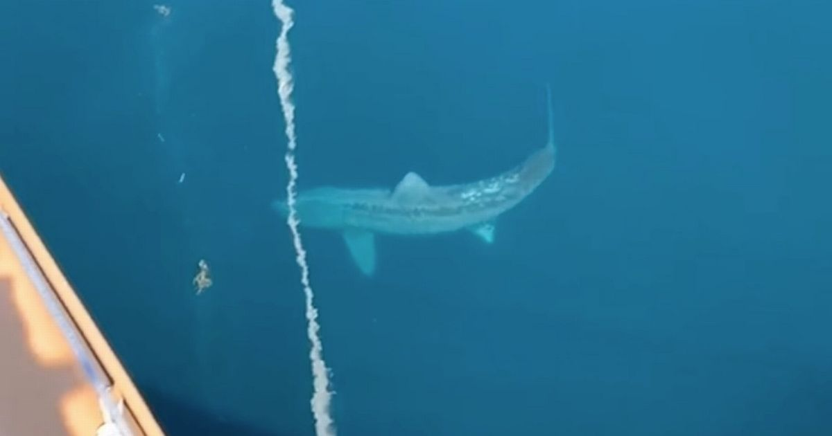 Giant shark sparks 'megalodon' fears as it circles cruise ship scaring tourists