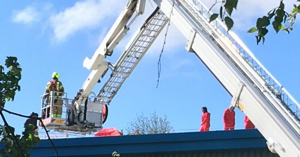 Palestine Action protestors scale roof of Israeli-owned factory