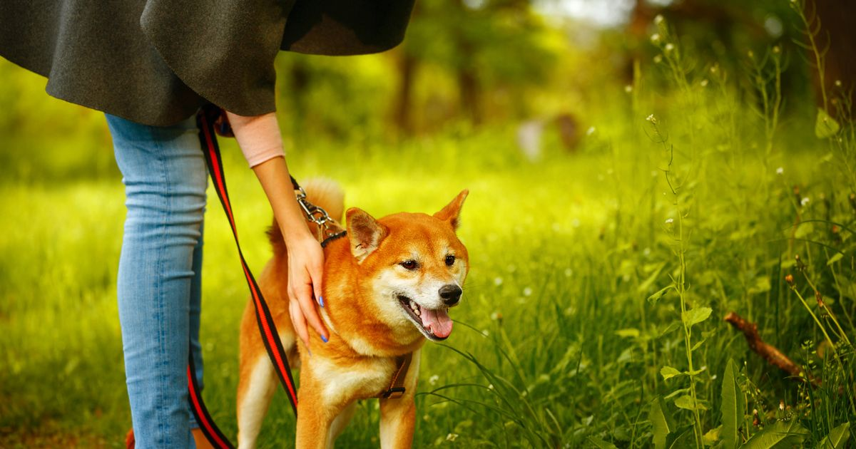 Shiba Inu coin: What's the price and can it reach $1?