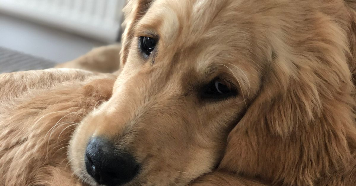Alabama rot - signs and symptoms to look out for in your dog