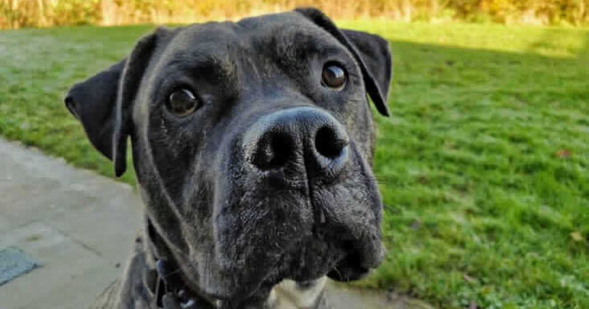 Britain's 'loneliest dog' needs a home after 775 days with the RSPCA