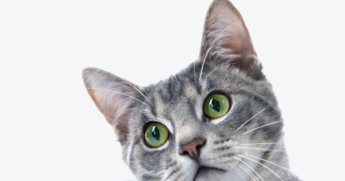 Cat food recalled over potential link to rare and fatal disease