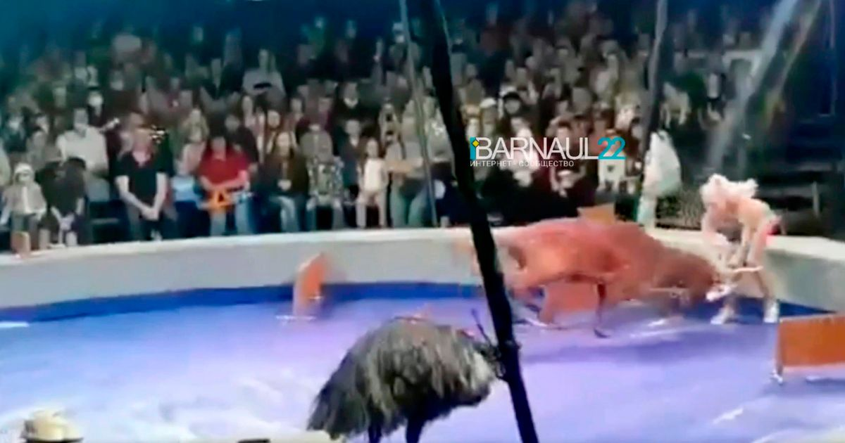 Circus trainer gored by deer after trying to make it perform in front of crowd