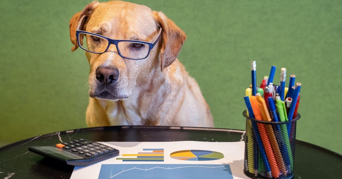 Is your dog better at maths than a two-year-old