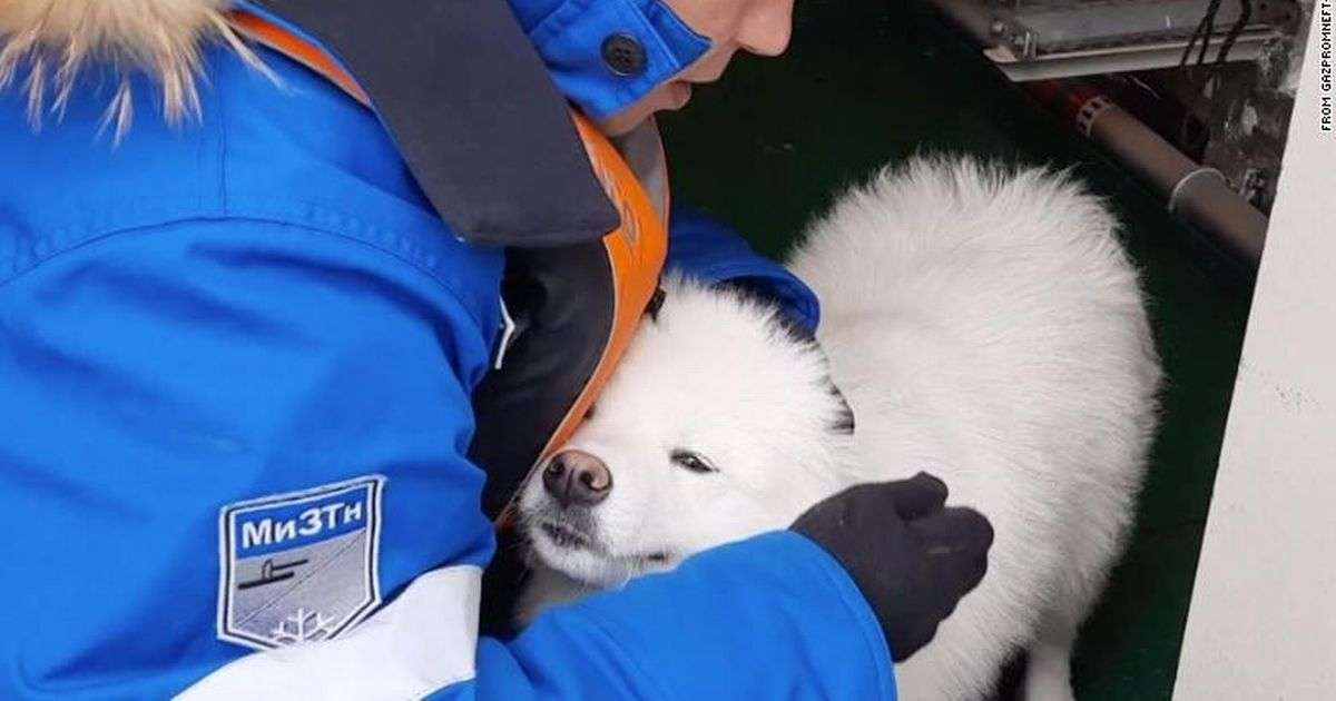 Lost dog is rescued by ship crew after walking through Arctic ice for a week