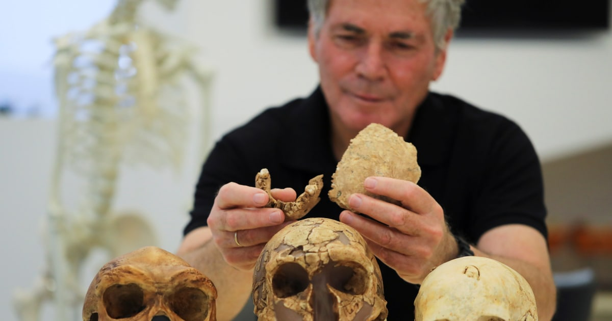 Meet Nesher Ramla Homo: 130,000-year-old fossils in Israel could be mystery early human