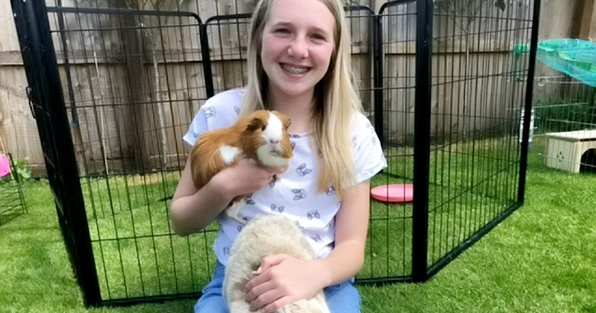 Meet the teenager whose small pet hotel has already taken 400 bookings