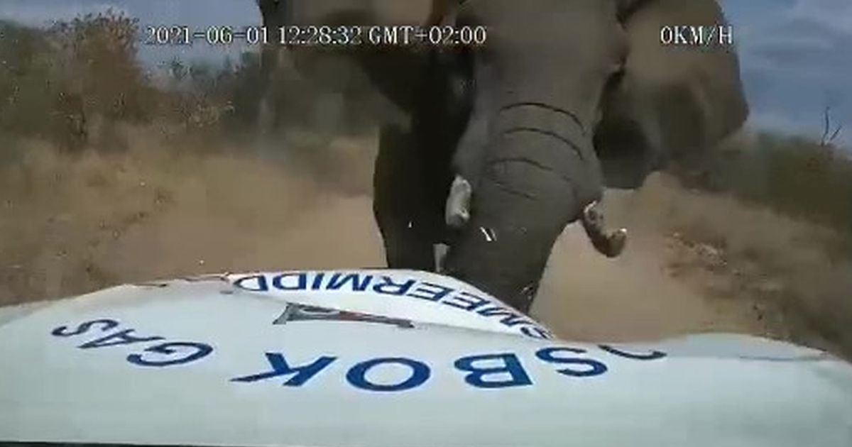 Moment furious elephant crushes truck leaving driver 'fearing for his life'