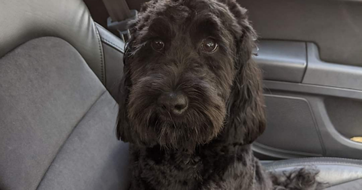 Pet experts share how to help dogs with travel anxiety