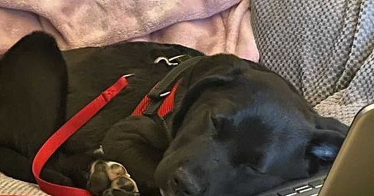 Severe hip dysplasia leaves puppy struggling to live normally
