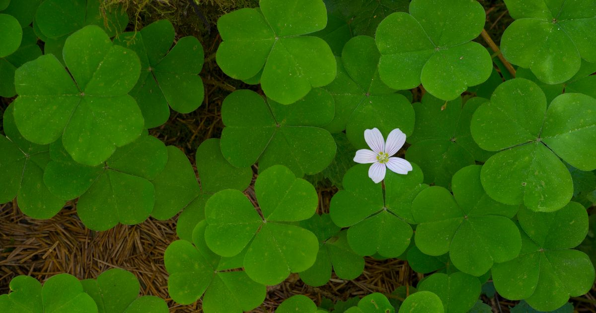 Six Clovers crypto: What is it and why is it so popular?