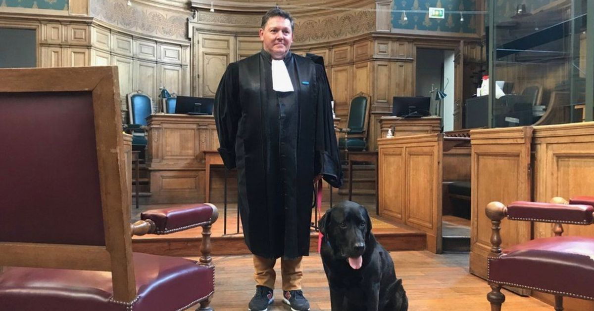 Specially-trained dog works in court to help soothe anxious victims of crime