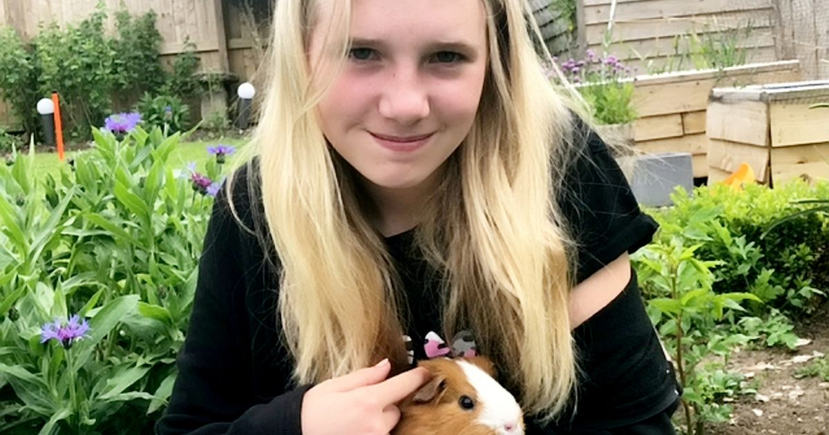 Teenager's small pet hotel has already had 400 bookings