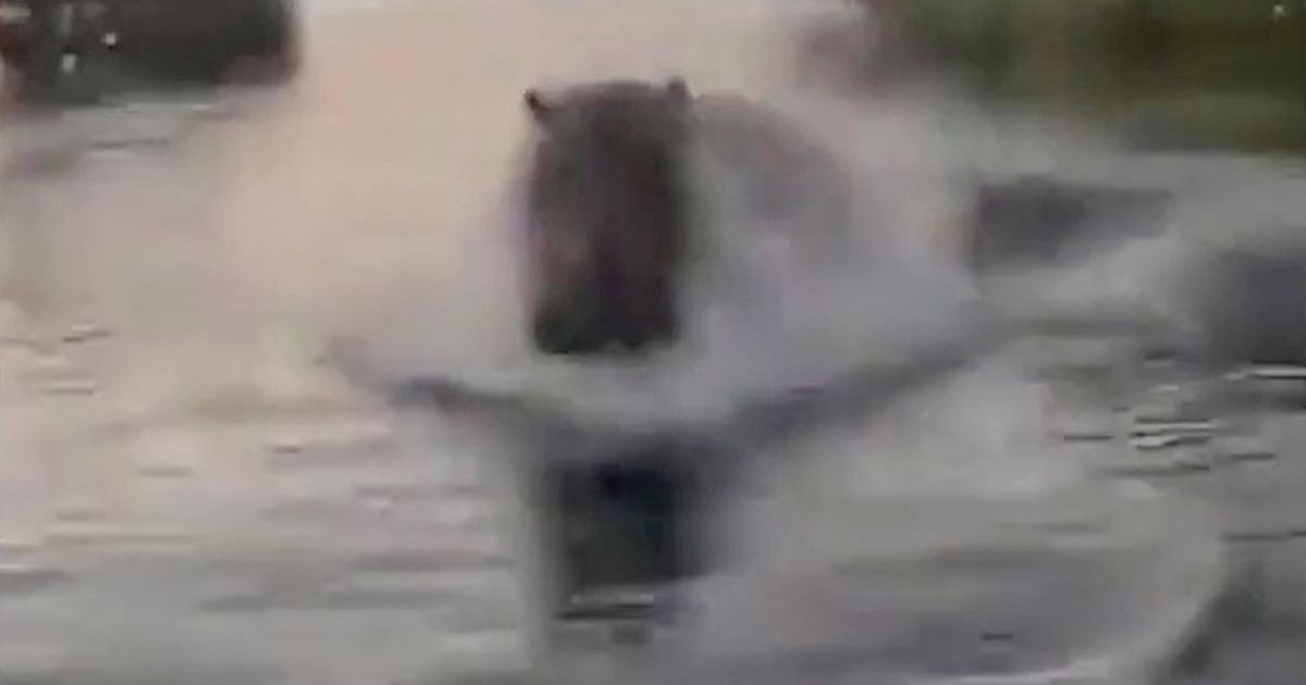 Terrifying moment hungry hippo chases boat full of tourists on sightseeing trip