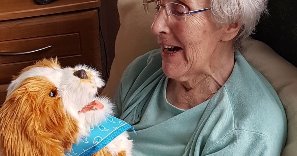 The robo-dogs bringing comfort to care home residents with dementia