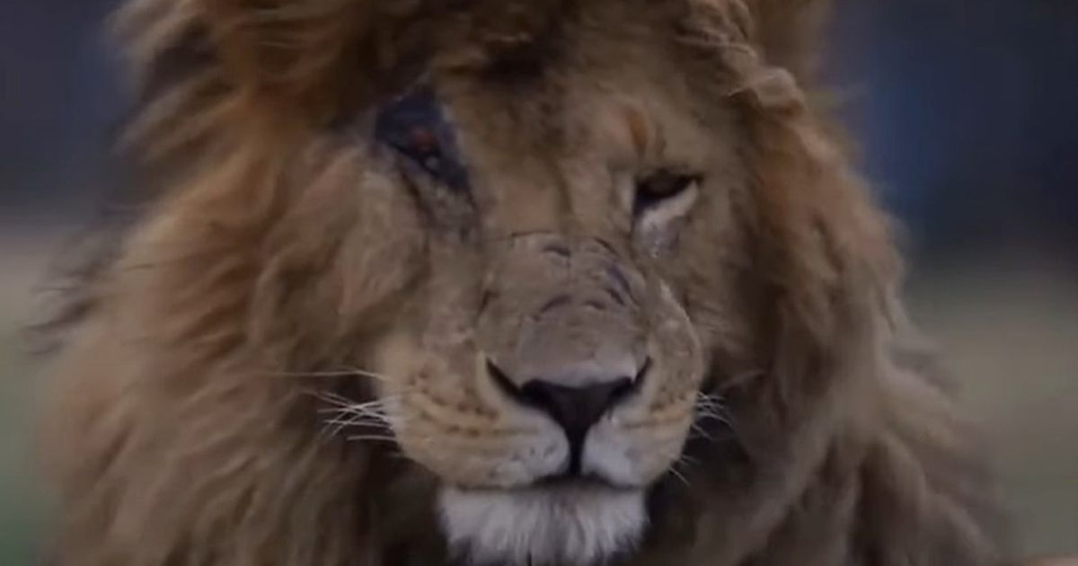 World's 'most famous' lion dubbed scarface dies in Kenya aged 14