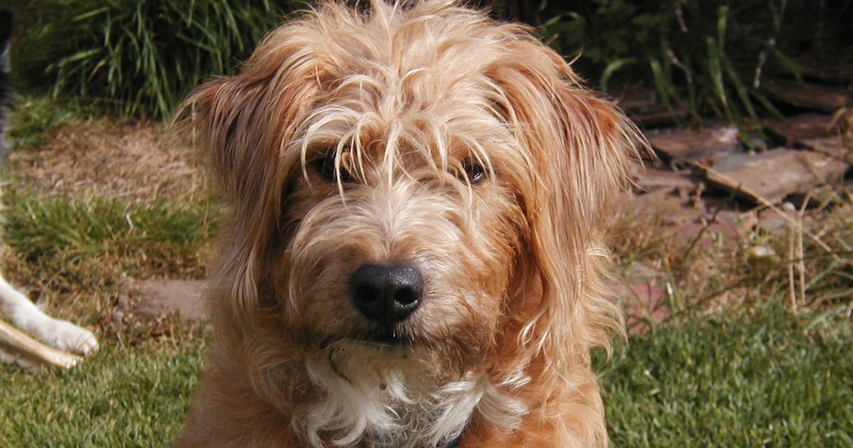 Family's decade long search for dog who disappeared on walk