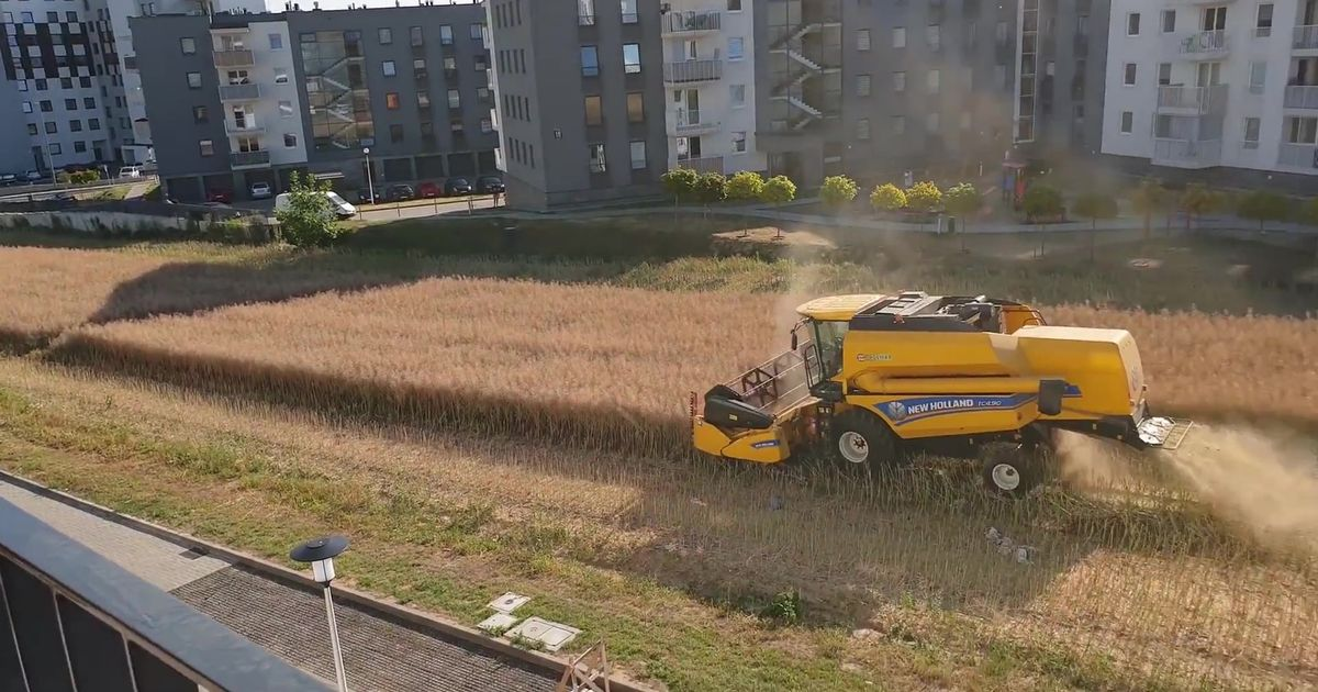 Farmer harvests field surrounded by blocks of flats after refusing to sell land