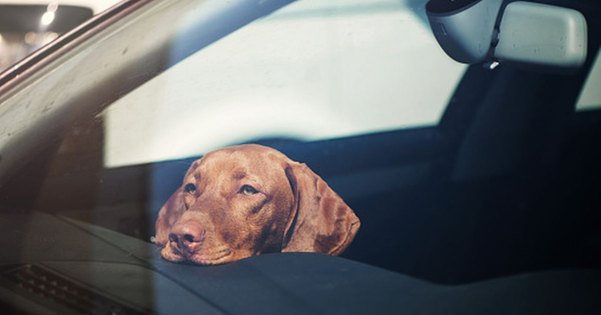 Is it legal to break into car to help a distressed dog during heatwave?