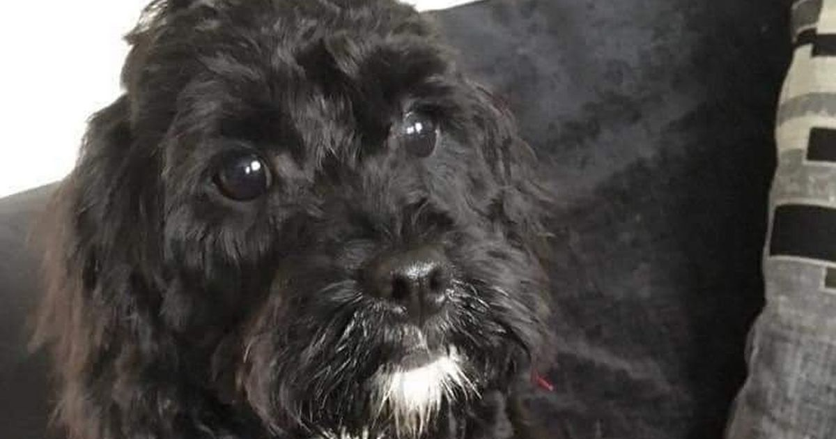 Missing dog that forced part of M6 to close leaves family heartbroken