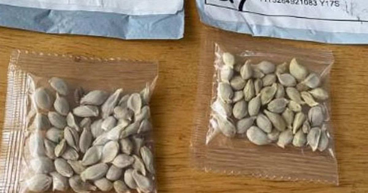 Mystery of unexpected Chinese seed deliveries solved