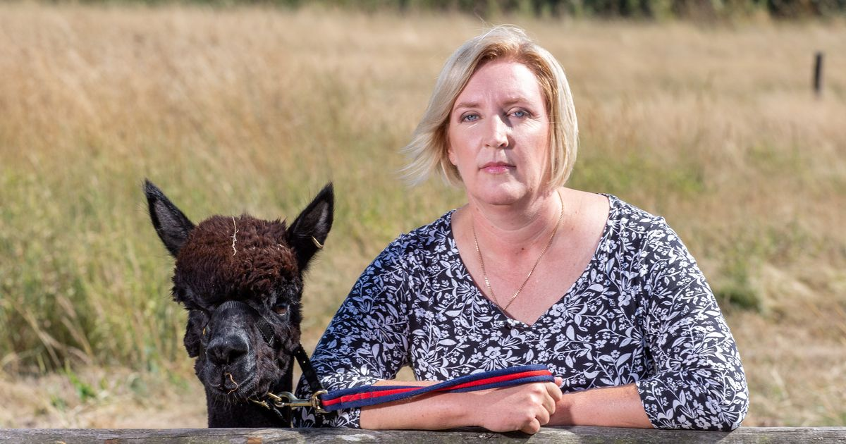 Owner of alpaca living on 'death row' makes last-ditch effort to save him