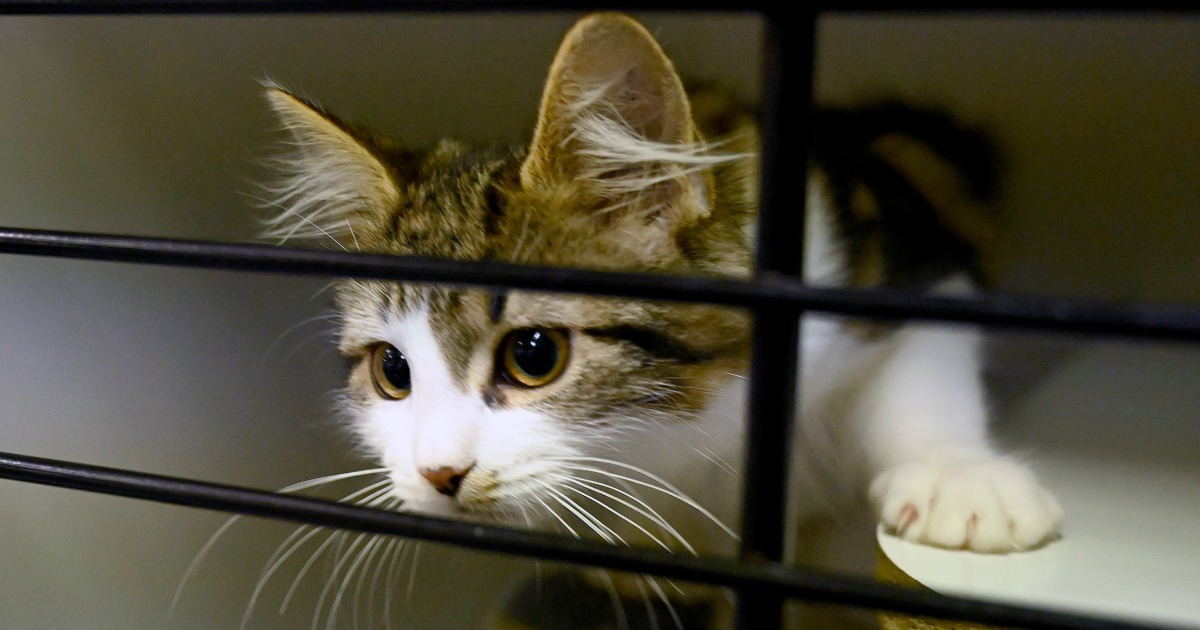 Owners face fines as Australian council introduces 24-hour 'cat curfew'