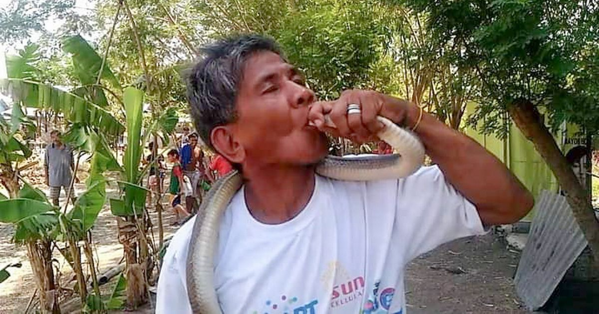 Snake expert, 62, who claimed he was immune to venom is killed by cobra bite