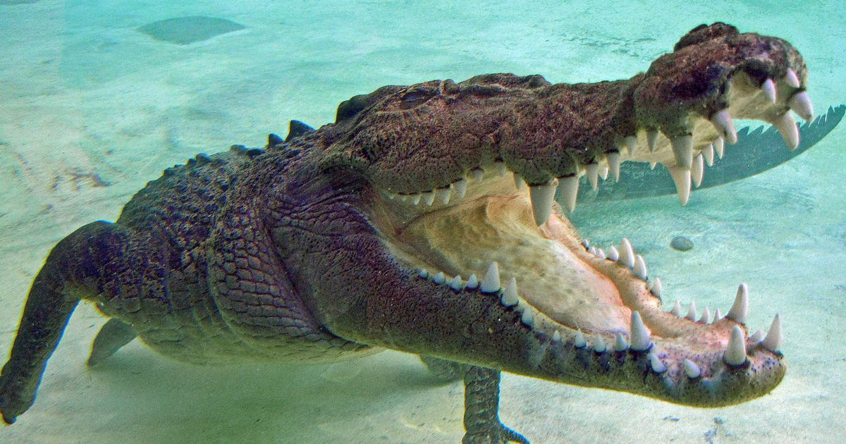Teen fights off crocodile after it attacked her on holiday in Mexico