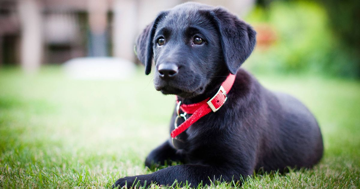 Vet shares five mistakes new puppy owners need to avoid