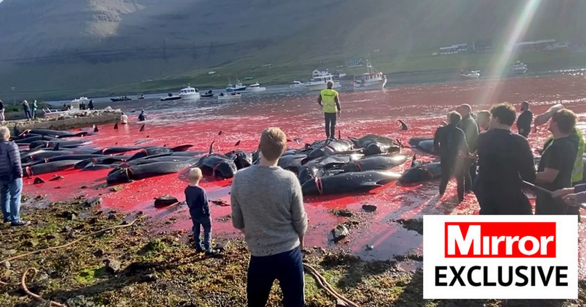 Waters turn red after hundreds of whales slaughtered for gory annual 'tradition'