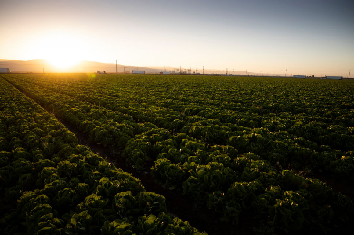 Why all agriculture carbon credits aren't the same