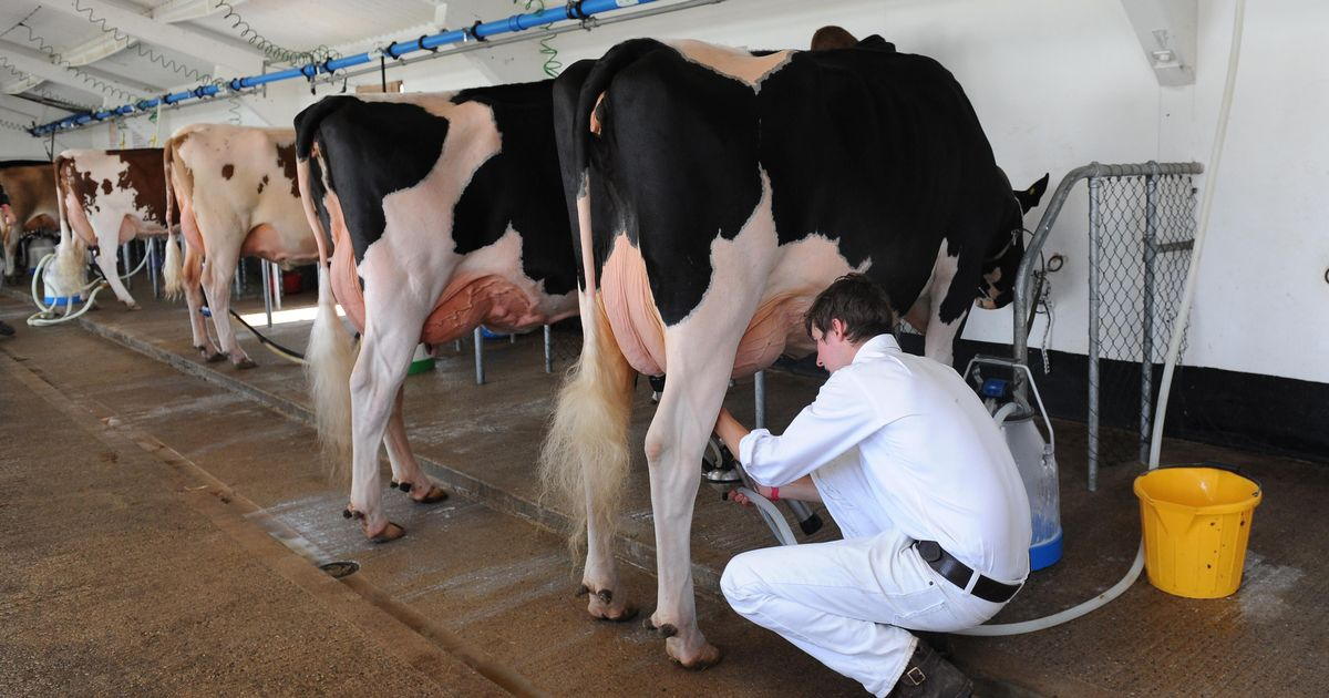 'Poo power' and Fitbit-like monitors helping farmers cut climate impact of milk