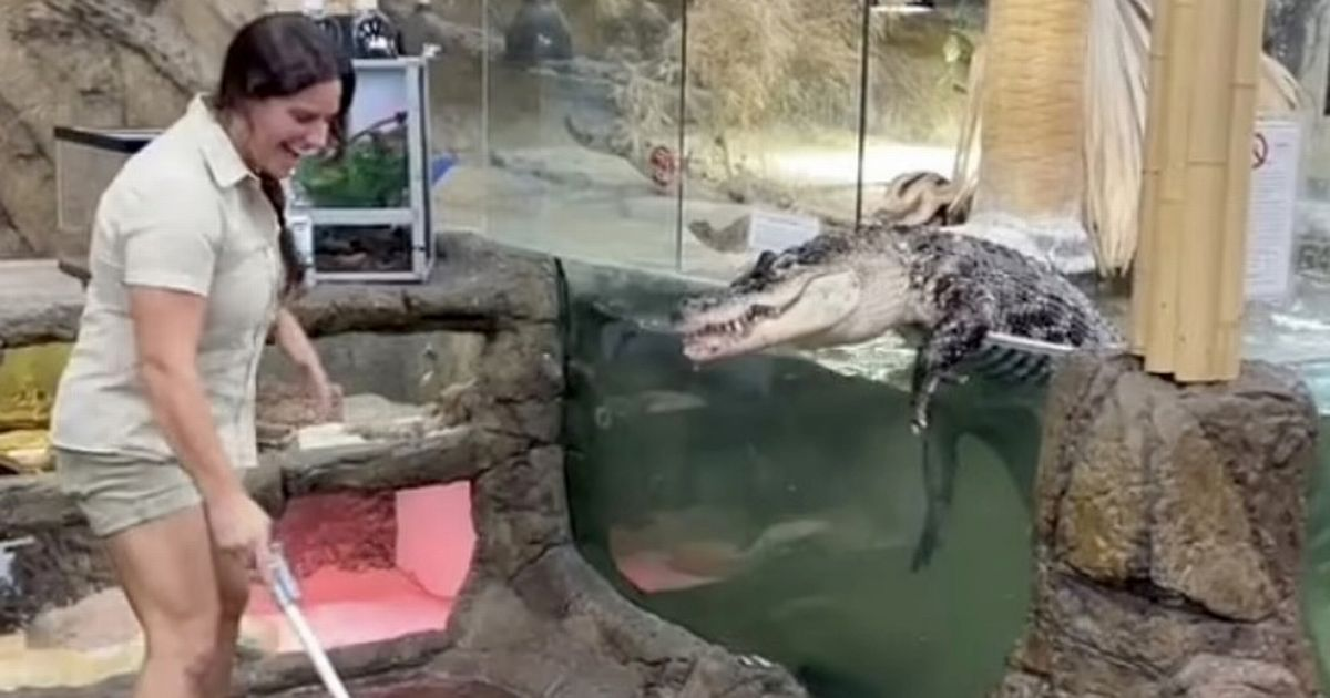 Alligator named Darth Gator makes dramatic escape from zoo during feeding time
