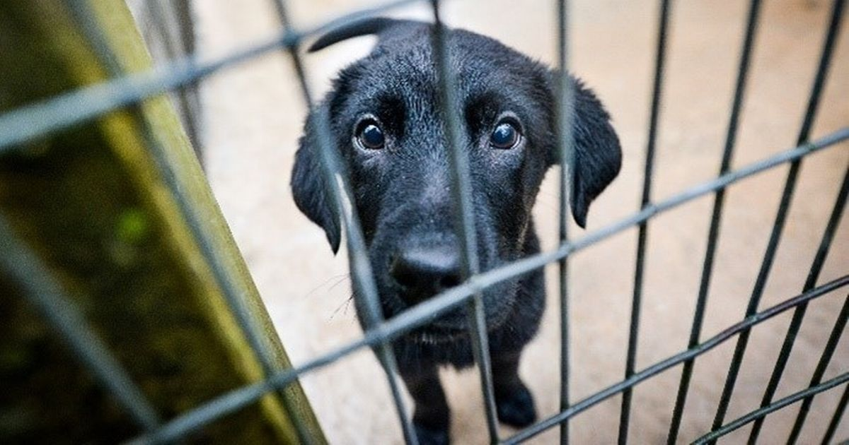 Crackdown on puppy smuggling and dog cruelty outlined by UK government