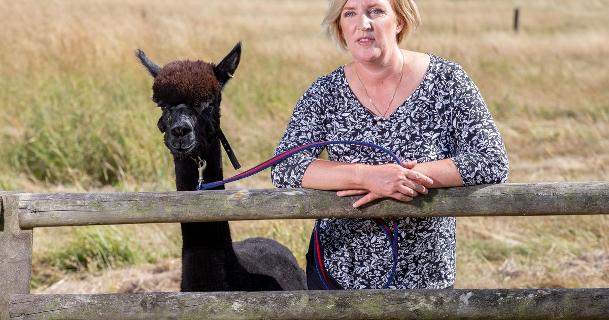 Owner's desperate bid to save Geronimo the alpaca gains worldwide support
