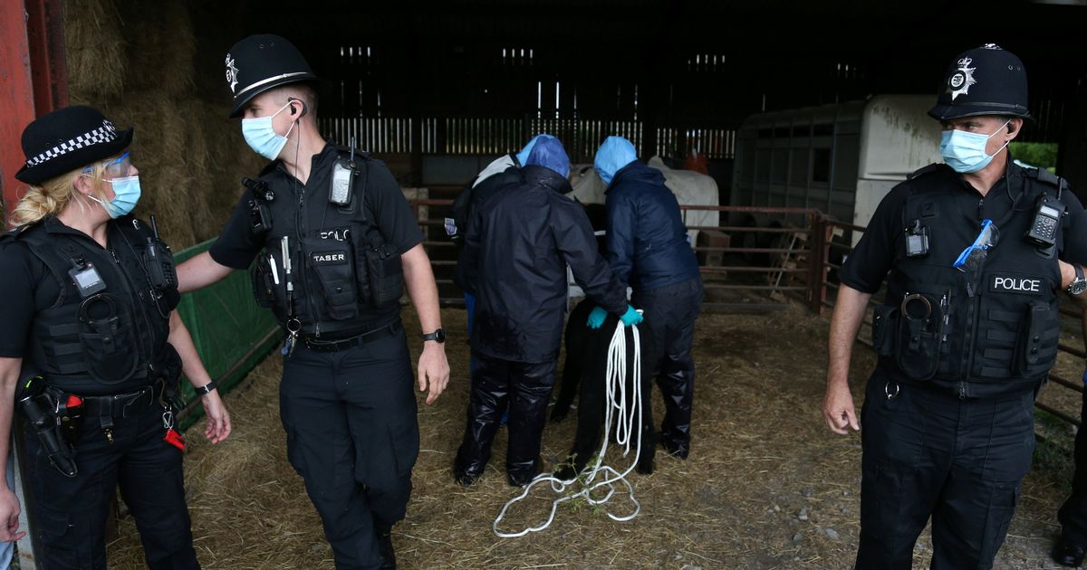 Police arrive at Geronimo Alpaca farm ahead of date he must be destroyed by - latest updates