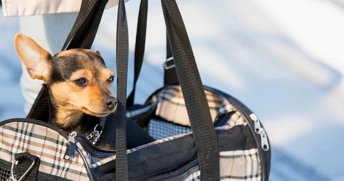 These are all the rules you need to know around bringing animals into the UK from overseas