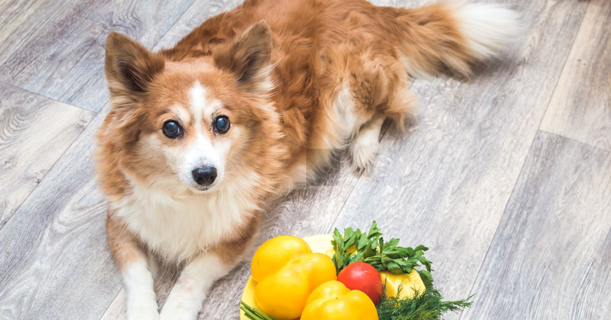 Top vet tells dog owners if they should share a roast dinner with their pet