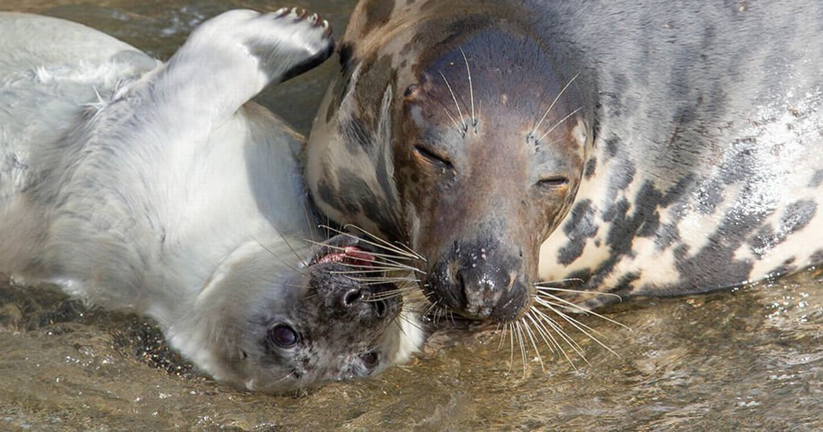 Baby seal dies after its mother is scared off by people wanting selfies