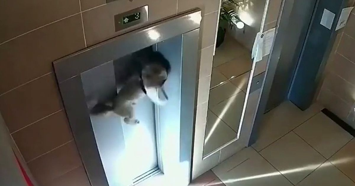 Dog caught in lift door by leash after careless owner fails to spot pet is not inside