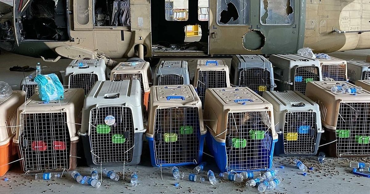 Dogs face slaughter after being abandoned to Taliban as troops flee Afghanistan